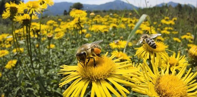 Javni poziv za subvencioniranje prihrane osnovnog stada ili pčelinjih zajednica poljoprivrednih proizvođača s područja Općine Gornja Rijeka u 2019. godini