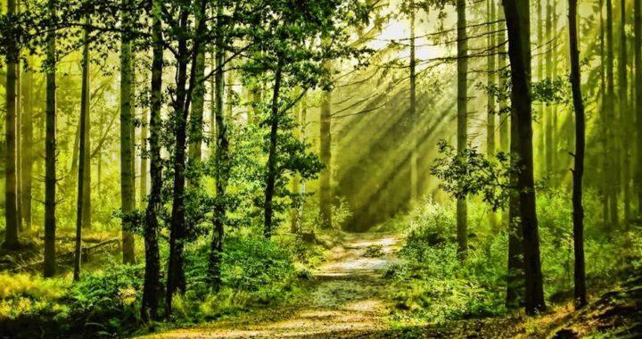 Poziv na javni uvid i javnu raspravu povodom izrade Osnove gospodarenja za gospodarsku jedinicu Križevačke prigorske šume (2020. – 2029.)